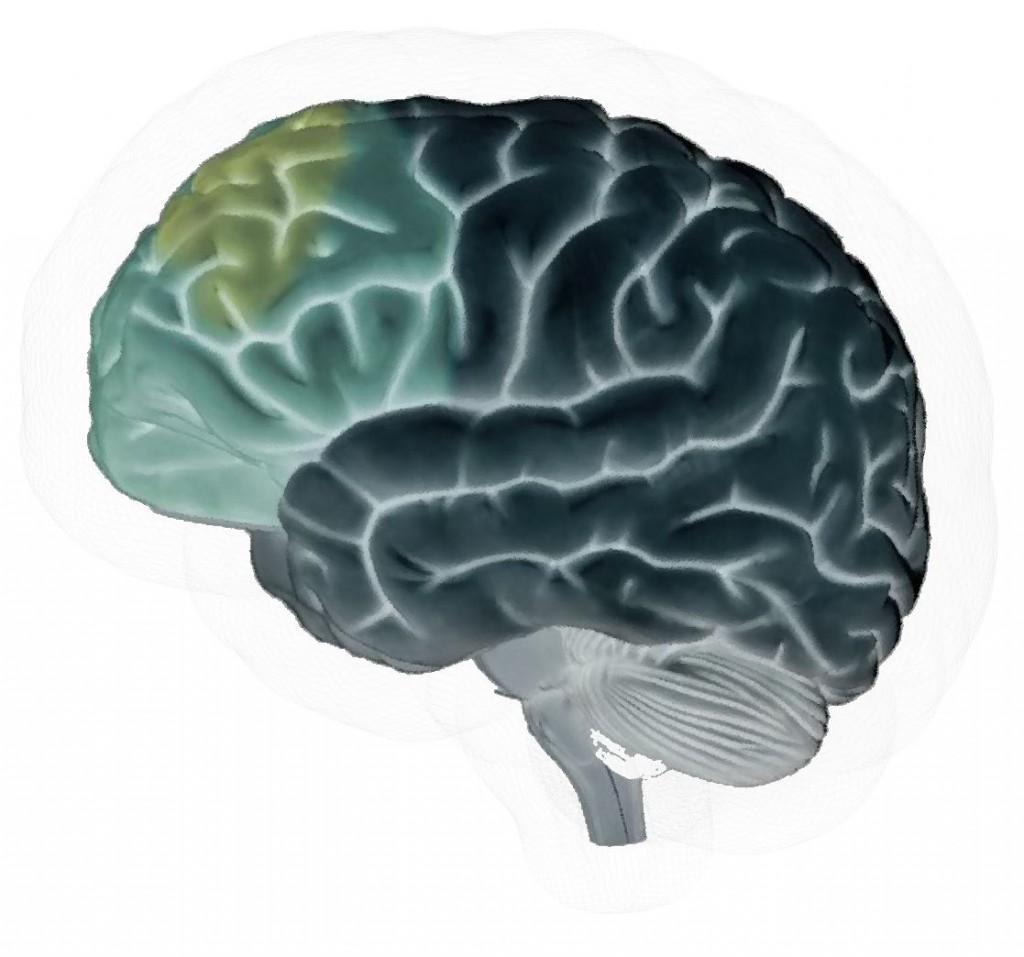 Corteccia Prefrontale, sede delle funzioni esecutive del pensiero logico, della decisione, del giudizio, della riflessione